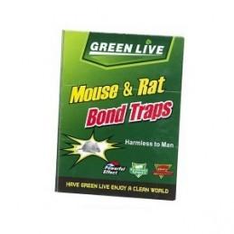 Trap mice 16,5x21,5cm...